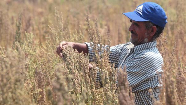 La producción en cambio, se redujo en Junín, Ancash, Huánuco, Cajamarca, Puno, Arequipa y Amazonas.