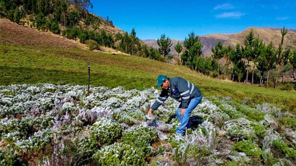 Los recursos se destinarán a financiar proyectos del fondo Sierra Azul del Ministerio de Agricultura y Riego.
