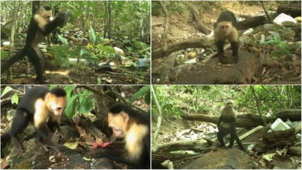 Los monos reaccionaron ante un ambiente potencialmente hostil.
