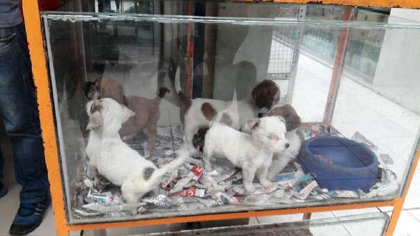 Perritos permanecían en una pecera, solo dormían en periódico cortado y no tenían alimento ni agua