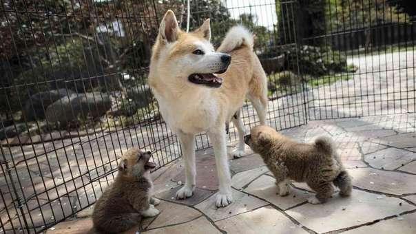 Los perros pequeños usan tácticas para engañar y protegerse de los más grandes.