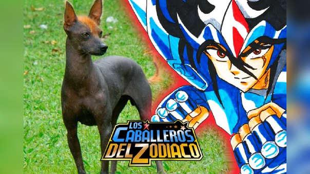 Sipán del perro peruano