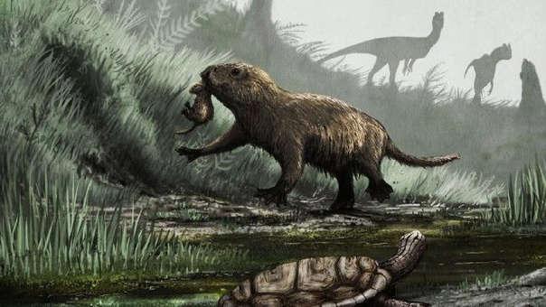 Los restos son de un grupo de especímenes de Kayentatherium wellesi, similares a los mamíferos conocido como tritilodóntidos.
