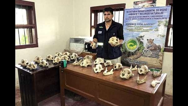 Un viaje al mercado negro de jaguares en Bolivia