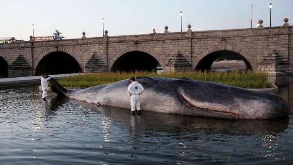 La estructura apareció en el Río Manzanares.