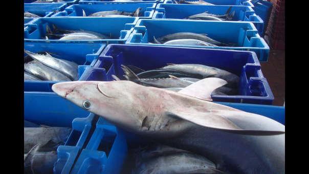 Tres de cada cuatro peruanos comen tiburón sin saberlo