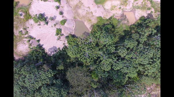 Perú: sembrando bosques donde hubo minería en Madre de Dios