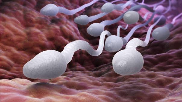 Cuantas horas tarda el espermatozoide para llegar al ovulo