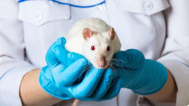 Los investigadores aún no determinan cómo se dio el contagio.