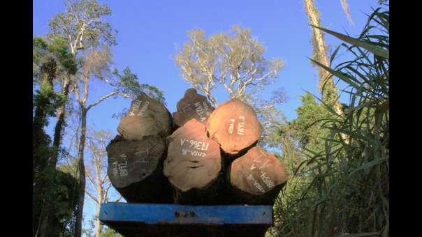 Especial Madera Sucia: Los últimos árboles de la Amazonía