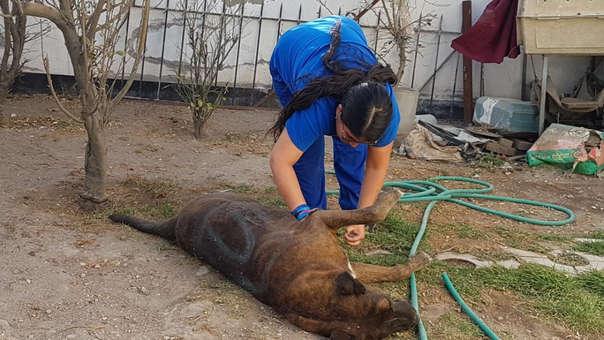 Scooby en clínica tras ataque con pintura de aerosol