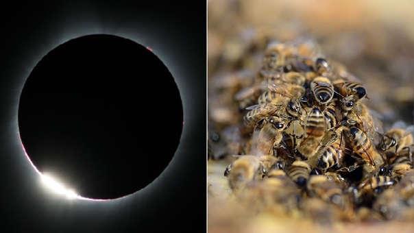Los eclipses afectan la conducta de animales como peces, aves y abejas.