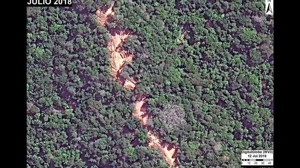 Tala selectiva en un área de aprovechamiento forestal en Ucayali