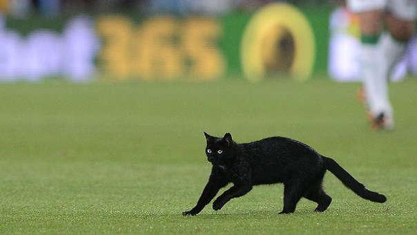 El gato negro también está asociado a la mala suerte como la fecha martes 13.