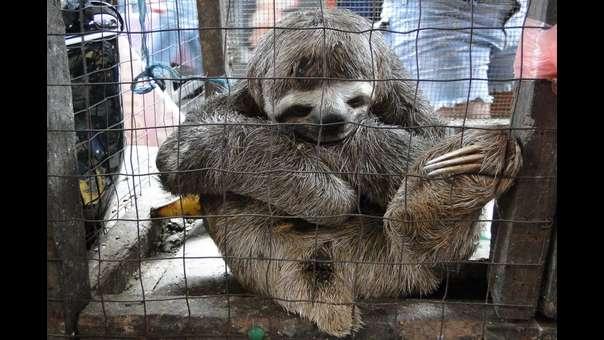 Tráfico de fauna en Perú: imágenes impactantes del comercio ilegal de especies