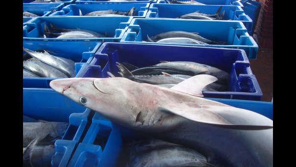 Consumo de tiburón en el Perú