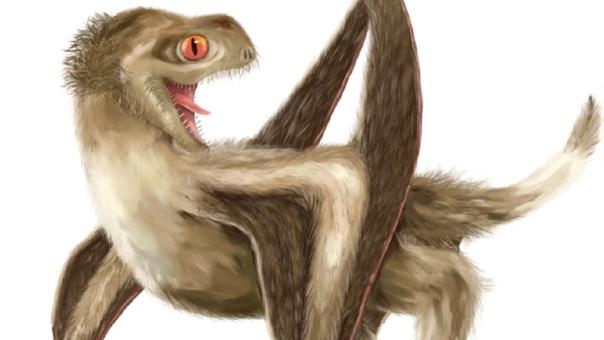 Reconstrucción de los pterosaurios estudiados.