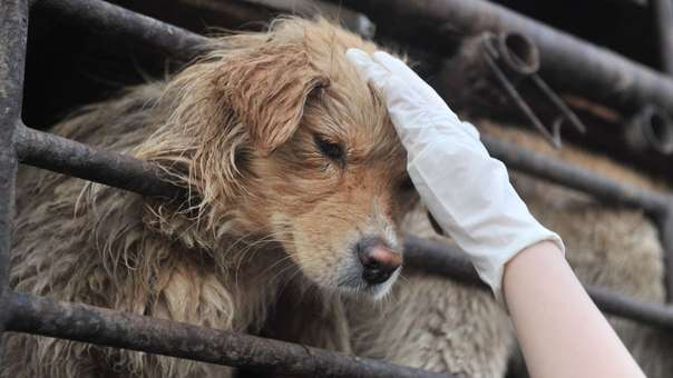 Un perro enjaulado en China es consolado por un activista.