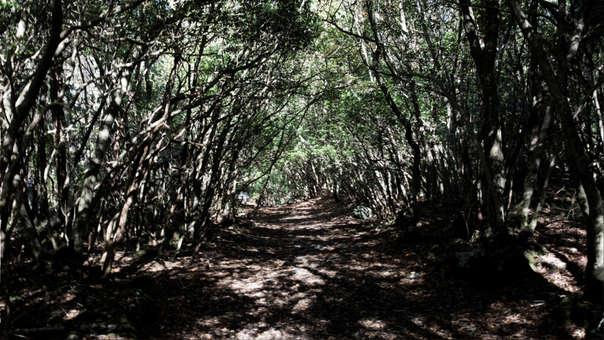 Camino dentro del bosque Aokigahara, el bosque del suicidio, en Japón.
