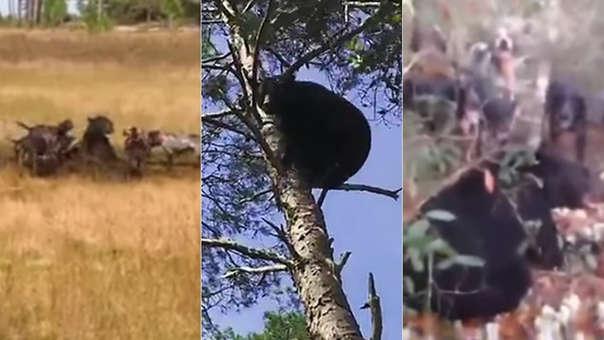 Capturas de los videos que muestran los abusos contra los osos.