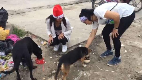 Alimento a perros de la calle