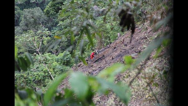 Narcotráfico en Bahuaja Sonene