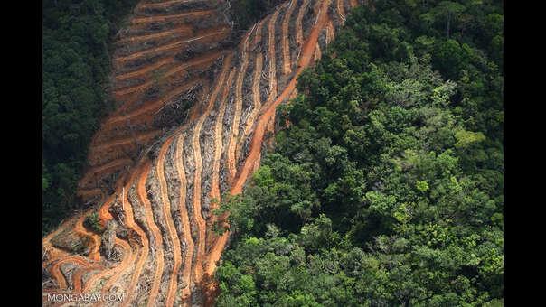 Deforestación en Asia