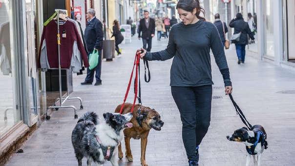 Puedes pasear perros, cuidarlos y hacerles jugar y ganar dinero de esta manera.