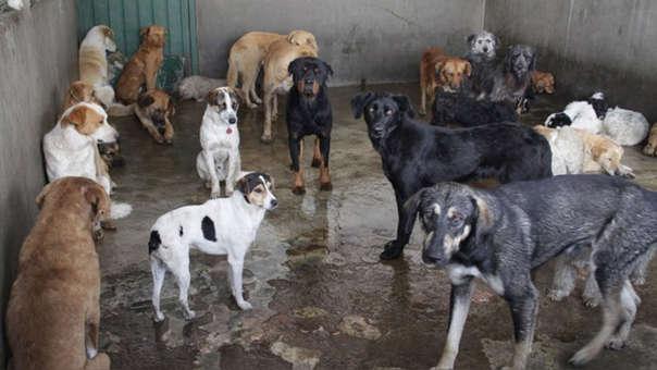 La Municipalidad de San Miguel aclaró que por el momento no cuenta con una perrera municipal.