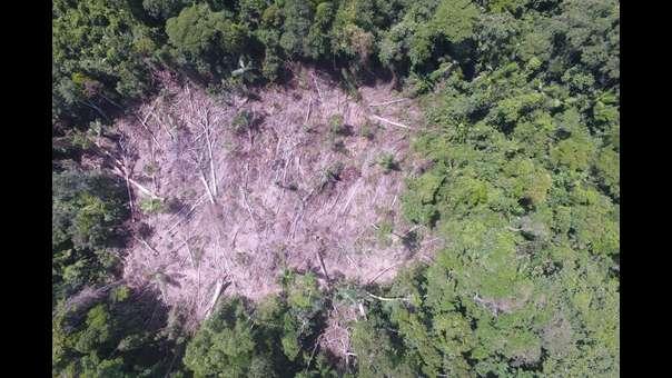 Bosque Macuya