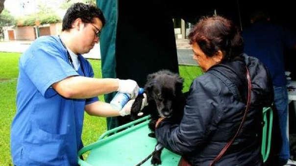Atención veterinaria