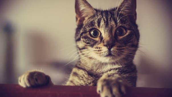 La muerte de los gatos se grabó en video