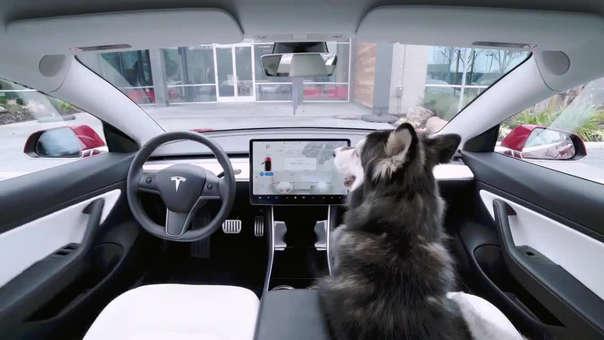El modo está pensado en las mascotas ante la cantidad de incidentes de perros sofocados por el calor dentro de un auto.