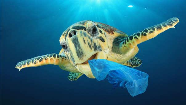 ¡Salvemos los océanos! 6 hábitos necesarios para lograrlo