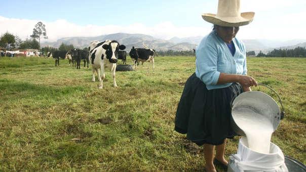 Familias ganaderas del norte del país e industria láctea peruana son afectados por paralización de transportistas, pues imposibilita traslado de producto a las plantas industriales de Lima.