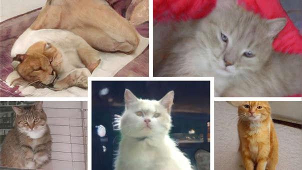 Estos gatos no existen. Han sido creados por una Inteligencia Artificial