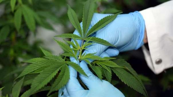 Gobierno publicó la ley que regula el uso medicinal y terapéutico del Cannabis y sus derivados.