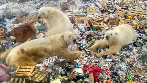 RUSSIA-ARCTIC-ENVIRONMENT-ANIMAL-CLIMATE