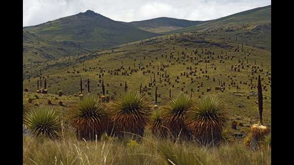 Santuario Nacional de Calipuy