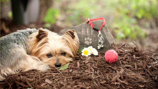 Un perro junto a la tumba de otra mascota