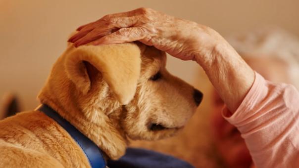 Tombot Puppy es el primer producto dirigido a ser mascota de compañía para adultos mayores