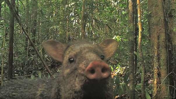 Fauna de Parque Río Puré en Colombia