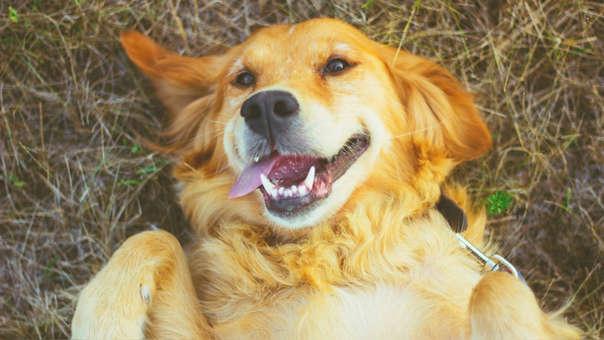 Animales domésticos como perros y gatos pueden transmitir esta cepa