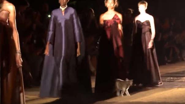 El gato irrumpió el desfile de la casa francesa Christian Dior.