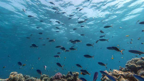 Mecanismo en peces para poder ver en profundidades del océano