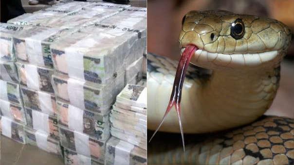 La mujer acusó a una serpiente de comerse el dinero por el que se le acusa