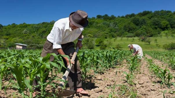 Mañana es un día histórico para el agro nacional al realizarse el primer Pleno agrario en el Congreso de la República y se exhorta a los legisladores a aprobar leyes que favorezcan a los pequeños agricultores.