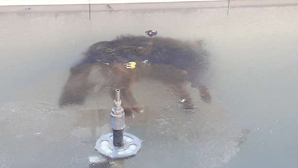 Perro congelado en Bolivia