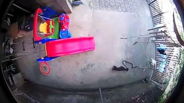 La pelea acabó con la vida del perro de raza Dachshund.