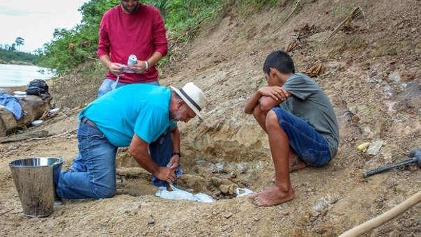 El 'purussaurus' llegaba a medir 12,5 metros de largo, tenía 8,4 toneladas de peso y habitaba desde Acre, en Brasil, hasta Panamá, pasando por los que hoy son territorios de Colombia, Venezuela y Perú.